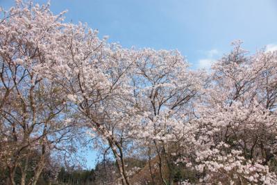 13_04_02_MishoSokakuji_5Dm20002.jpg