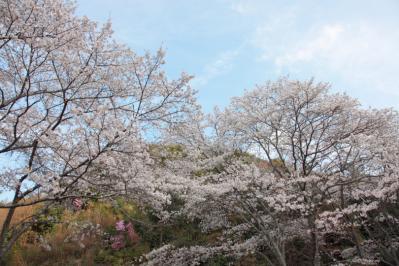 13_04_02_MishoSokakuji_5Dm20003.jpg
