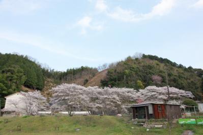 13_04_02_MishoSokakuji_5Dm20004.jpg