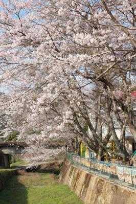 13_04_02_MishoSokakuji_5Dm20005.jpg