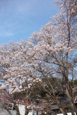 13_04_02_MishoSokakuji_5Dm20008.jpg