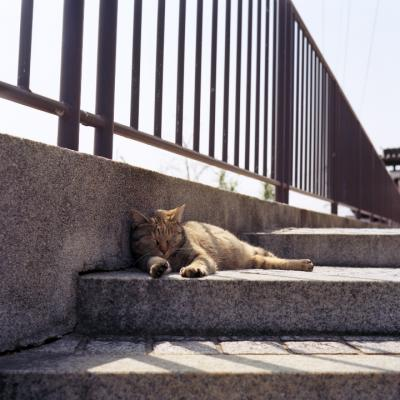 20130330_Cat_Autocord_Ektar.jpg