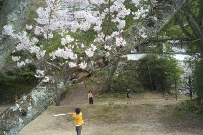 20130330_Miyajima_GXR_Colorskopar28_10.jpg