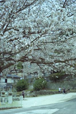 20130331_Miyajima_Colorskopar28_Gold_1.jpg