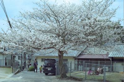 20130331_Miyajima_Colorskopar28_Gold.jpg