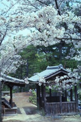 20130331_Miyajima_Summicron50_Gold_12.jpg