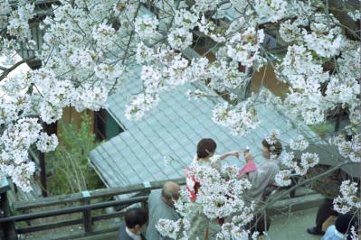 20130331_Miyajima_Summicron50_Gold_9.jpg