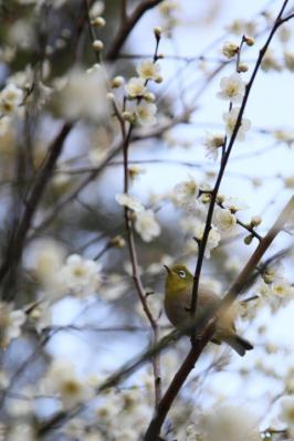2013_03_03_Shukkeien_5Dm20004.jpg
