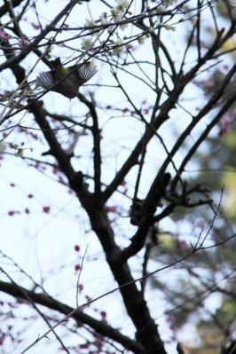 2013_03_03_Shukkeien_5Dm20006.jpg