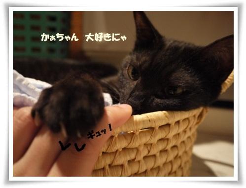うちのこ記念日4