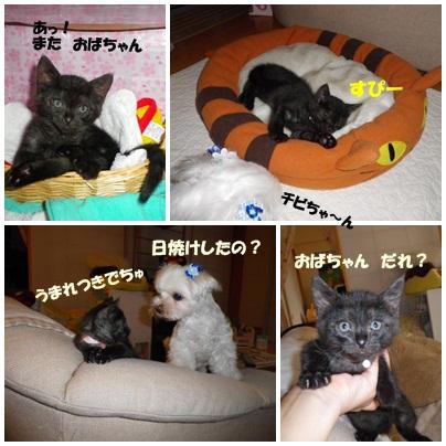うちのこ記念日 (4)