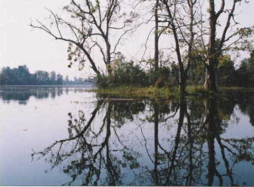 Kailali view4