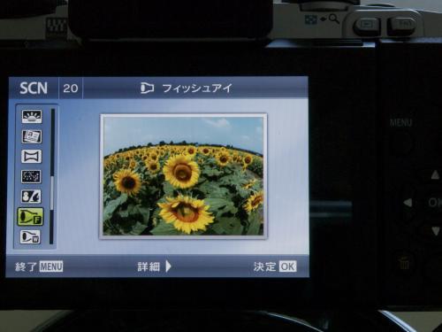 P8030718_convert_20120803150224.jpg