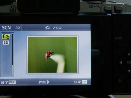 P8030722_convert_20120803150126.jpg