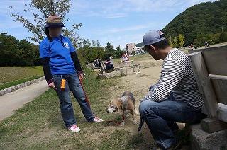 犬祭り-4
