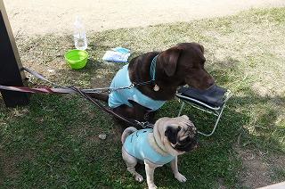 犬祭り-7