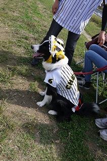 犬祭り-9
