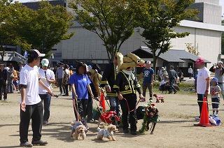 犬祭り-11