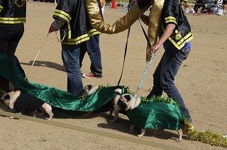 犬祭り-13