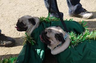 犬祭り-14