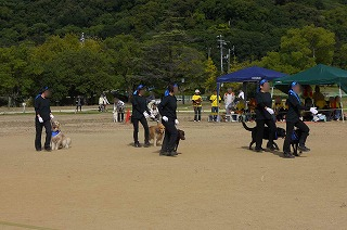 犬祭り-17