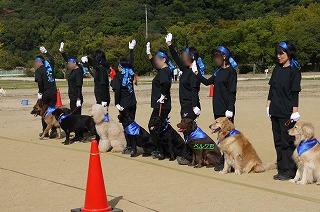 犬祭り-18