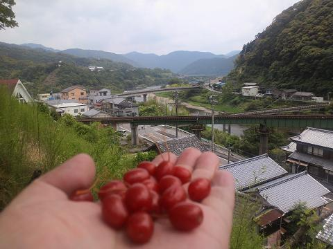 グミと江川30