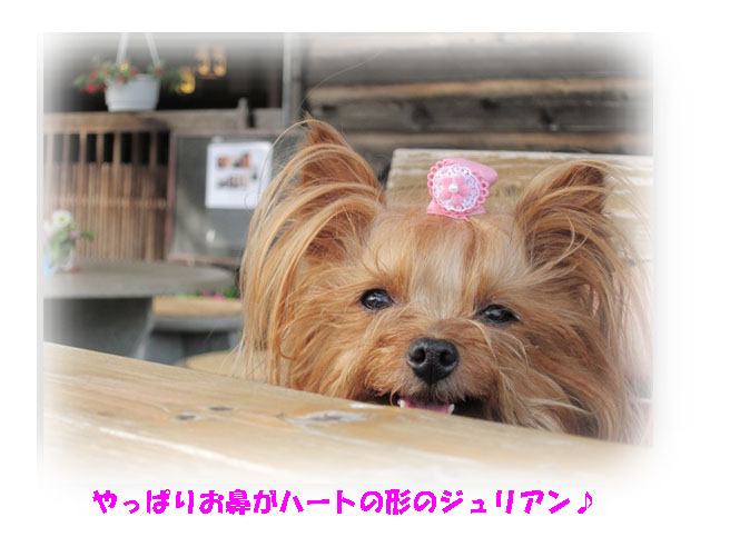 IMG_4390.jpg