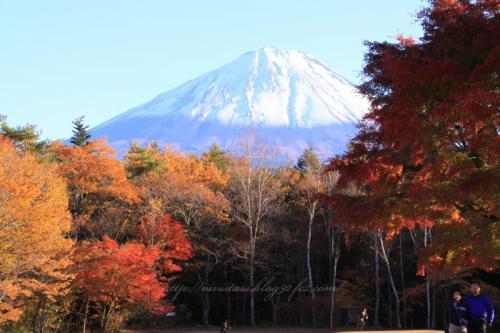 野鳥の森公園から富士山