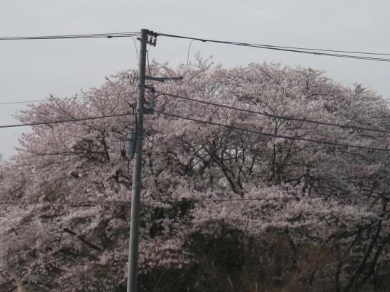 2013.3.28神奈川・東京4