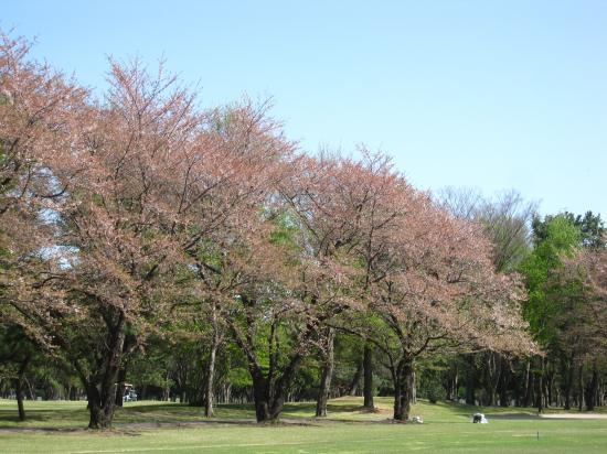2013.4.8群馬・栃木2