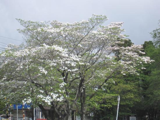 2013.5.2大阪・滋賀2