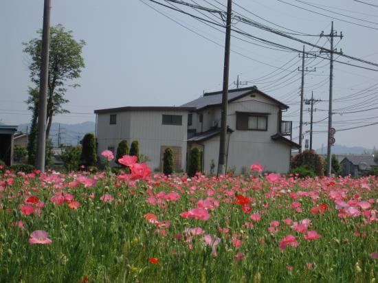 2013.5.14埼玉・栃木