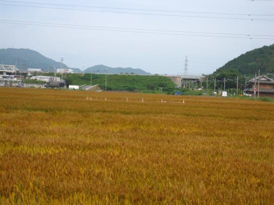 2013.5.31滋賀4