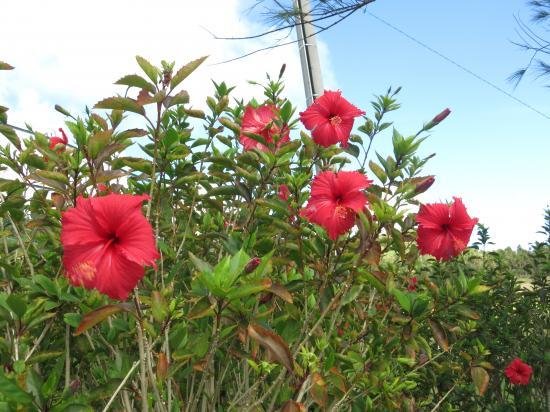 2013.9.30沖縄1