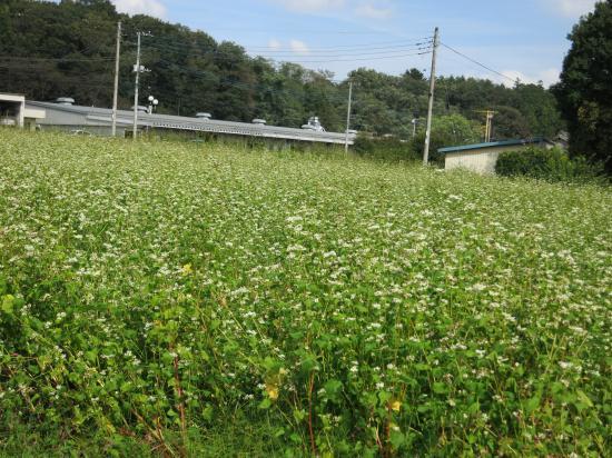 2013.10.8栃木2