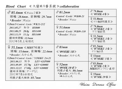 Waizu久留米9番系統図