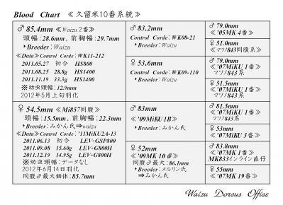 Waizu久留米10番系統図