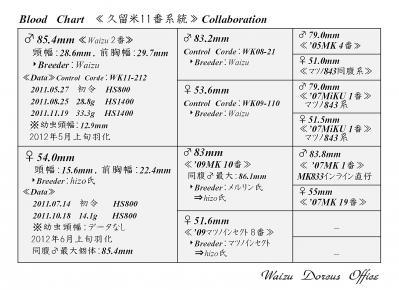 Waizu久留米11番系統図