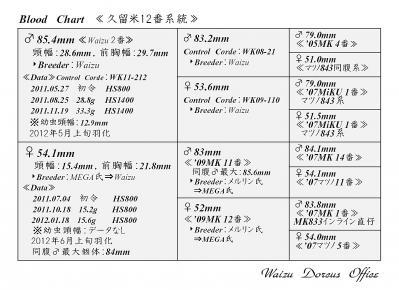 Waizu久留米12番系統図