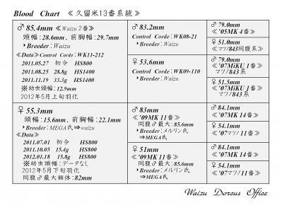 Waizu久留米13番系統図