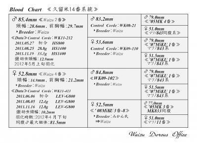 Waizu久留米14番系統図
