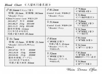 Waizu久留米15番系統図