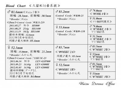 Waizu久留米16番系統図