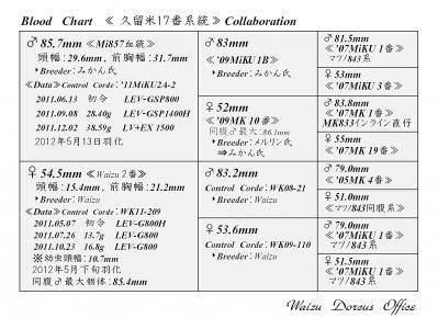 Waizu久留米17番系統図