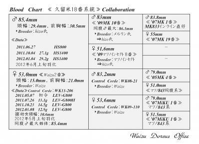 Waizu久留米18番系統図