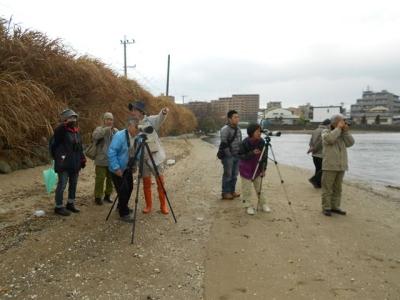和白川河口で観察
