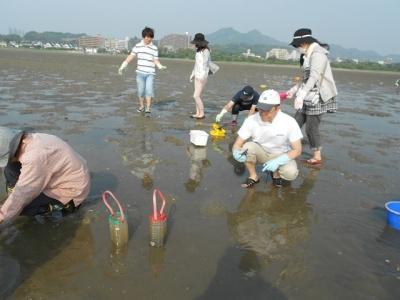 アサリの浄化実験