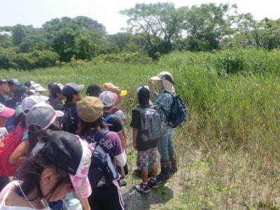 アシ原の植物観察