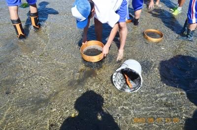 干潟の動物調査2